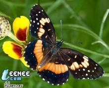 Butterflies *o* 2