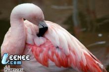 Flamingos*o*