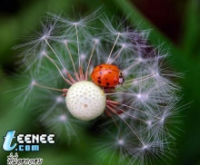 Lady Bugs แสนน่ารักจ้า :)