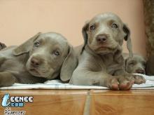 Puppy...น่ารัก น่ารัก *O*