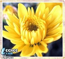 ดอกไม้ กับภาพถ่ายสวยๆ 2