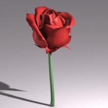 Model Flower