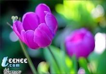 ดอกไม้กับภาพถ่าย สวยๆ