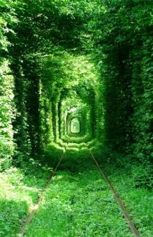 อุโมงค์รถไฟต้นไม้ อุโมงค์คู่รัก