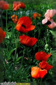 พักสายตาดูดอกไม้สวย ๆ จ้า
