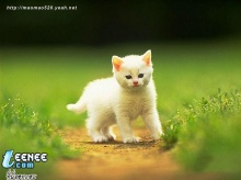 Puzzy cat (2)