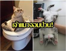 เจ้าแมวจอมป่วน! 21 รูป ของเจ้าเหมียว ที่จะทำให้คุณยิ้มได้ ตลอดวัน!