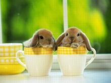 กระต่ายน้อย