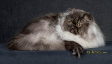 แมว(ของแนนซี่ค่ะ)2