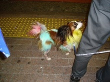 Colorful Dogs..!!