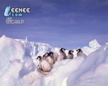 ลูกนกแพนกวิน..น่ารักมากๆๆ