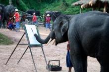 ~~~~: Amazing Elephant ~~~~