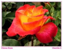 ดอกกุหลาบสวยๆมากแล้วจ้า