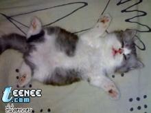 น้องแมวน่ารัก~~ง่วงนอนแล้วนะ