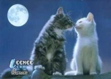 จูบ!! โรแมนติค