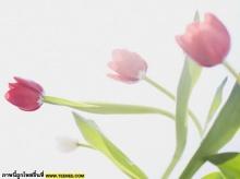 ดอกไม้สวย ๆ มาแล้วจ้า