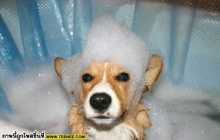 อาบน้ำกันไหม๊