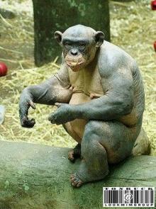 ลิงซิมแปนซี ขนหาย!!