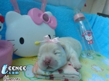 little dogs...so cute  >___<
