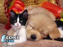 เอาใจคนรักแมว