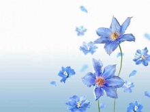 มาดูดอกไม้งาม ๆ