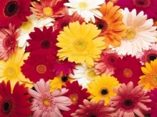 Flowers ...beautiful