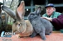 กระต่ายหรือบิ๊กฟุตนะ