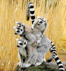 มหัศจรรย์สัตว์โลก...สัตว์โลกน่ารัก