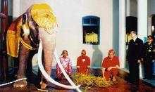 ช้างเผือกเชือกแรกของรัชกาลที่9 พระเศวตอดุลเดชพาหนฯ