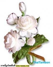 กระเช้าดอกมะลิสุดสวย