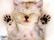 ฝันดีนะ...เจ้าแมวน้อย