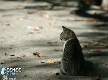 City Homeless Cat