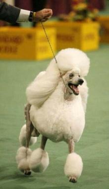 Dog Exhibition น่ารัก จริง ๆ
