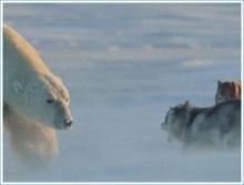 หมีกับหมา และ หมากับหมี ใครแน่กว่าใคร