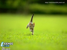 Puzzy Cat (1)