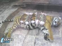 น่ารักน่าเอ็นดูมากเลยสัตว์พวกนี้