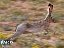 กระต่ายหูยาวมากเลยนิ