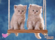 Cute Cats for Pets Lovers