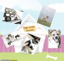 facebook เครือข่ายคนรักน้องหมา.com