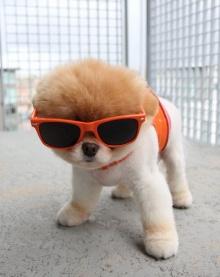 อัพเดทภาพน้องบู หมาน้อยแสนน่ารัก