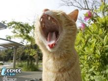 Homeless cat 2