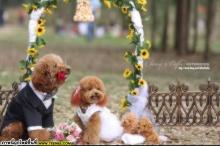 รูป Wedding ที่น่ารักที่สุดเท่าที่เคยเห็นมา