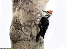 Animals Graphics