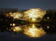 วิวสวย สวย จาก ญี่ปุ่น (2)