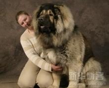 I Love Big Dog