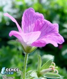 ดอกไม้...สุดสวย