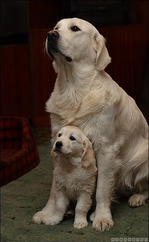 เก็บภาพ น้องหมา ในมุมน่ารักๆ