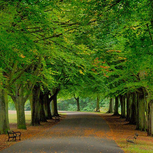 ทายนิสัย คุณคือต้นไม้แบบไหนกัน