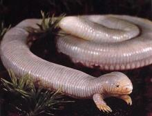 หนอน งู กิ่งก่า กิ่งกือ ดูเอาตัวไรแน่