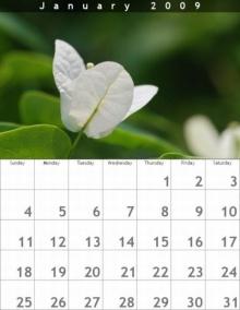 ปฏิทินดอกไม้สวยงามปี 2009